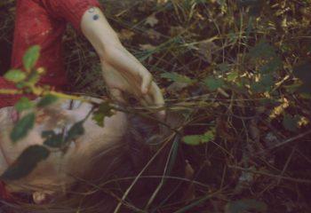 Dans les feuilles Epineuses