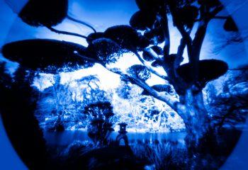 Blue Niwaki