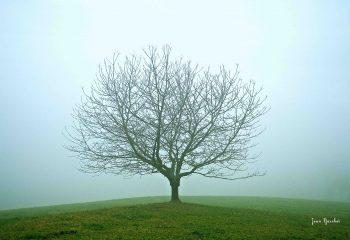 Tenue légère (dans la brume