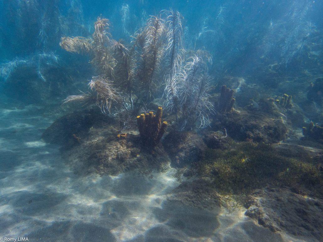 Lumière sous la mer