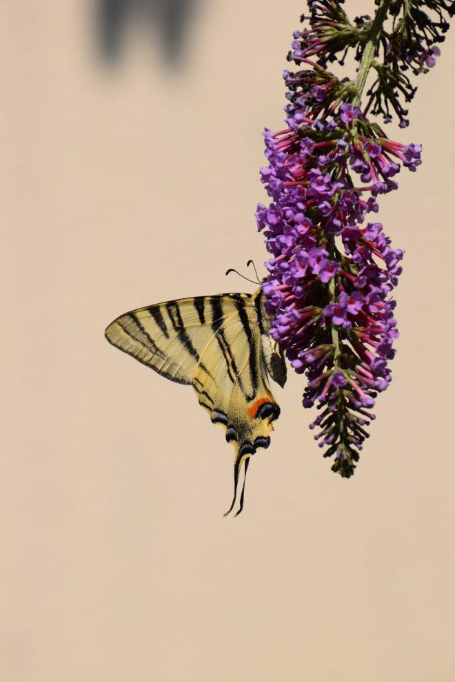 Ivresse de pollen