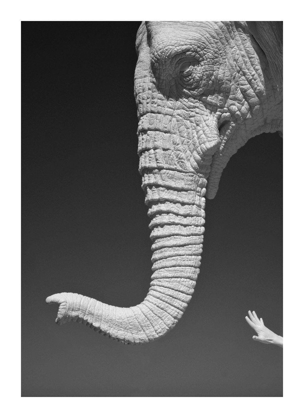 Elephantissime!