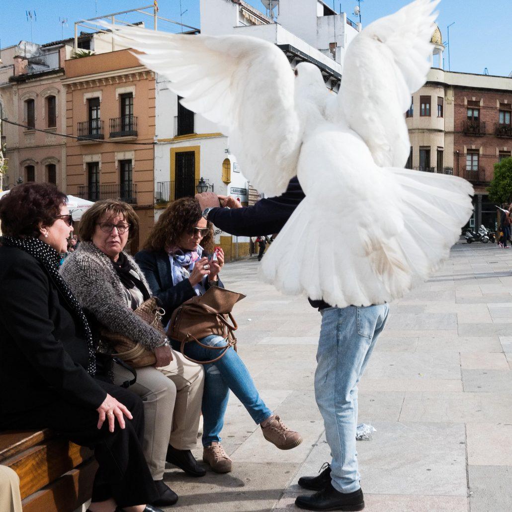 Pigeon blanc, pigeon charmant? – 3