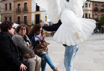 Pigeon blanc, pigeon charmant? - 3