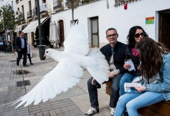Pigeon blanc, pigeon charmant? - 2