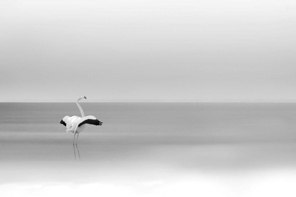 Flamant in minimalism