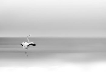 Flamant in minimalism