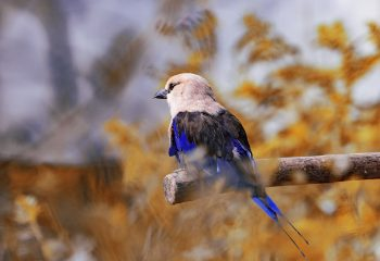 Sweet bird of paradise
