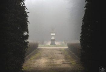 Allée brumeuse