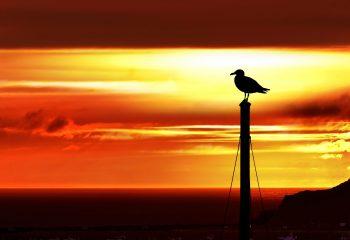 Sun set Goéland