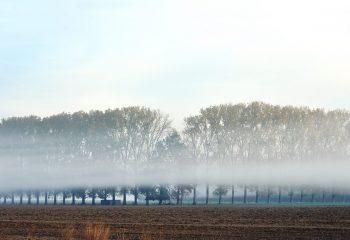 brume en campagne
