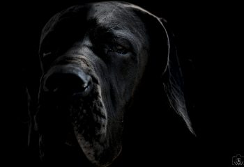 Dog Of Dark