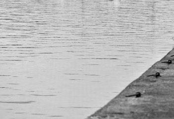 pêche en fin de ligne