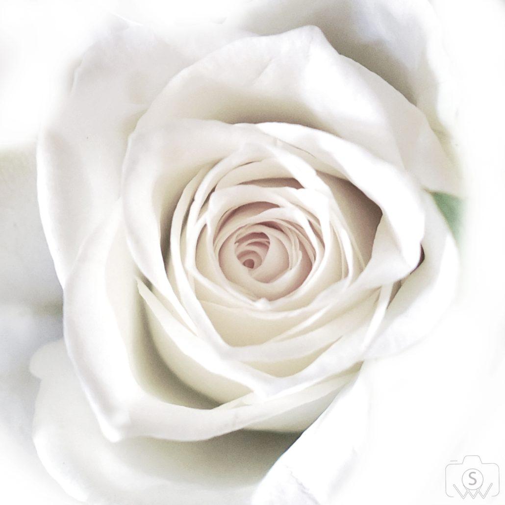 Minimal blanc