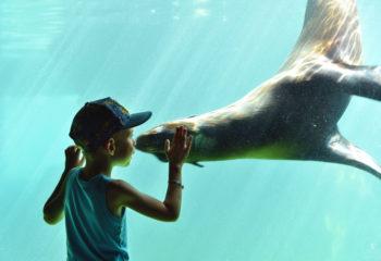 Manolis and the sea lion
