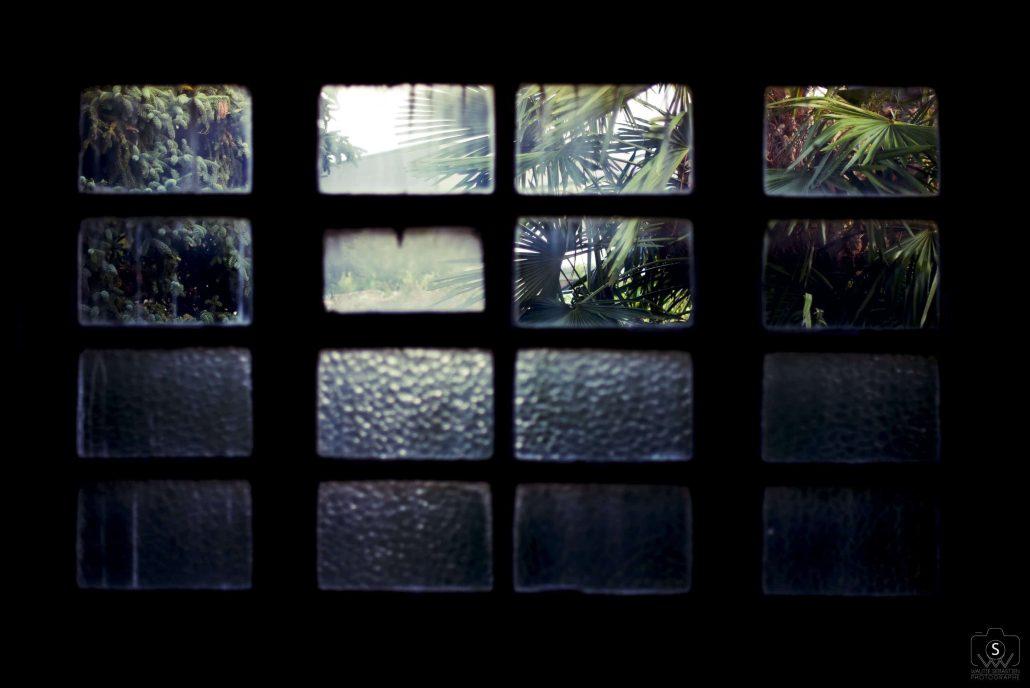 jungle outside window