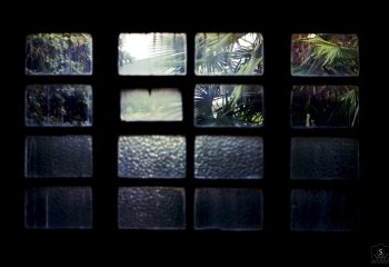 jungle outside window