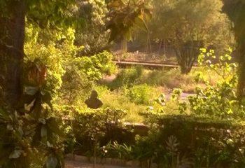 Le Jardin des plantes à Montpellier 1