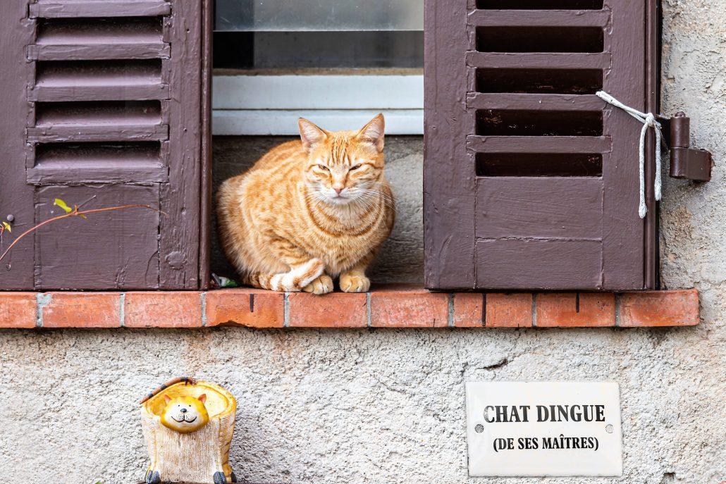 Chat dingue