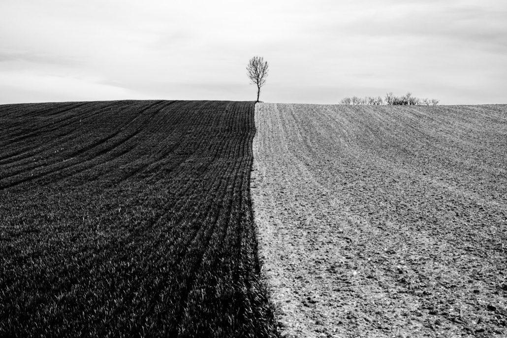 L'arbre suit sa racine #01