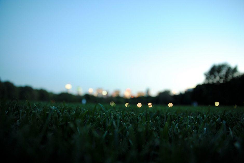 Central park grass