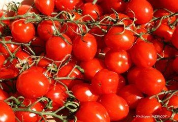 Philippe MERIGOT - Fruits Légumes