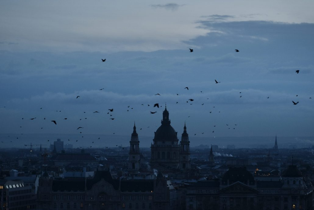 Birds over the city