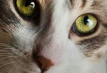 Dans les yeux