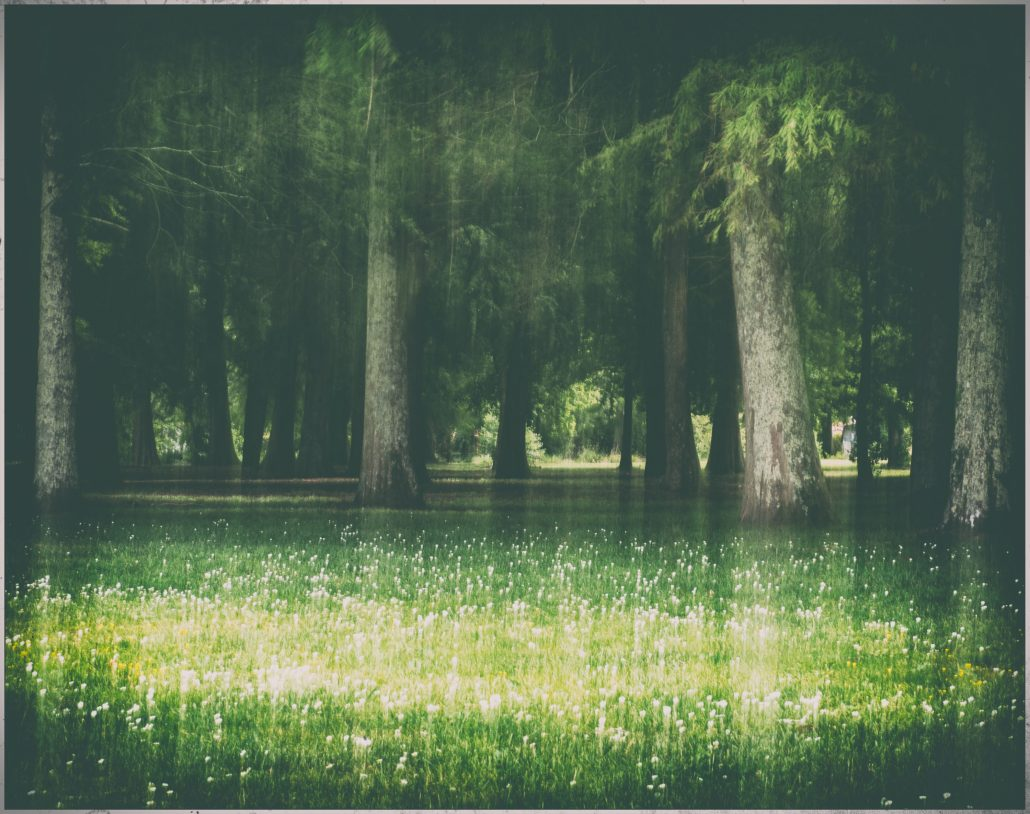 Waterwood