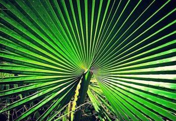 Ma photo préférée d'un palmier prise au Maroc