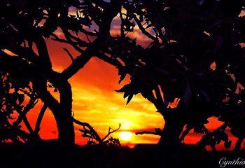 Paysage coucher du soleil