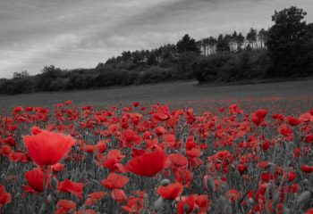 Coquelicots Red, Black and White