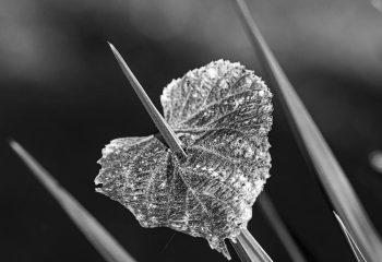 love anf leaf