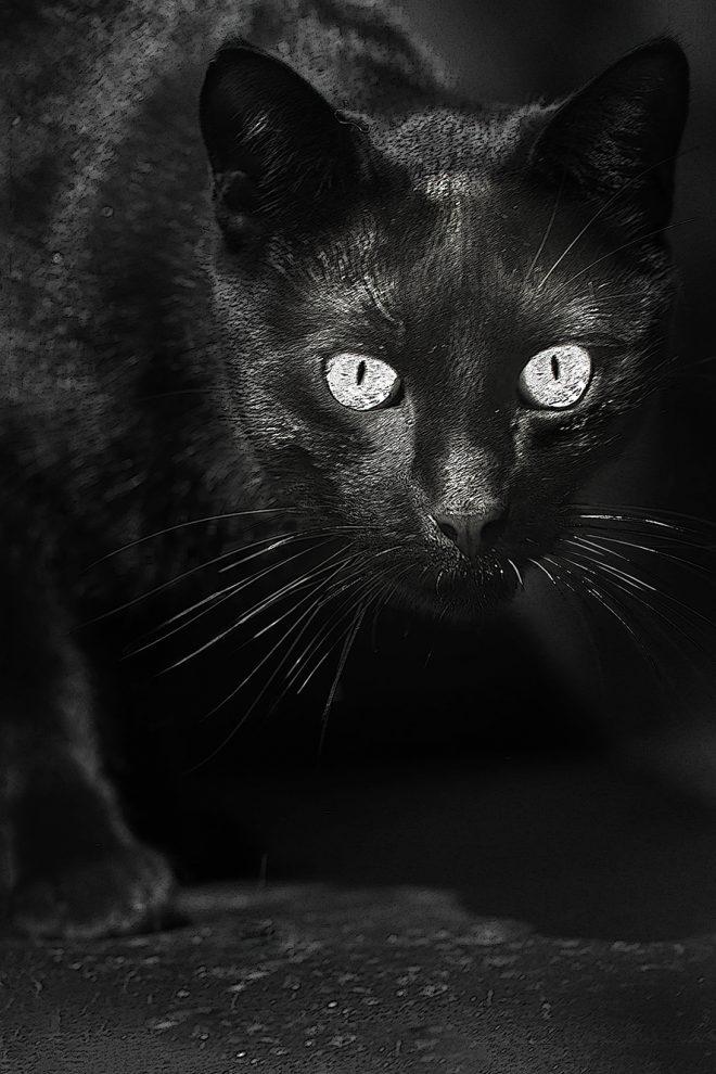 Réglisse le chat noir