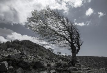 Petit arbre dans le vent