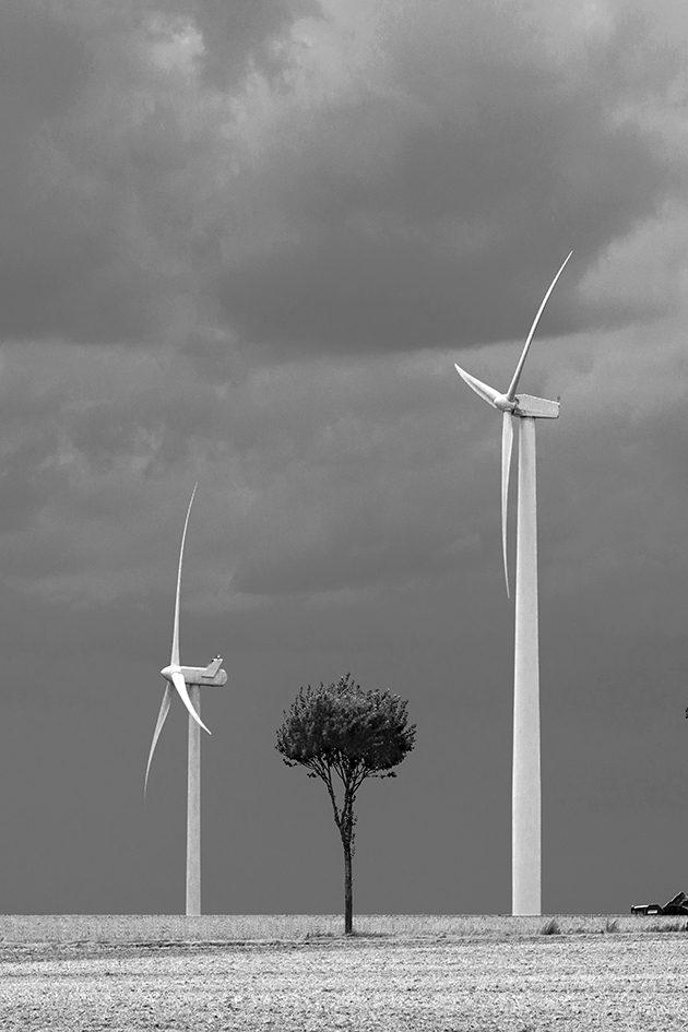 Petit arbre coincé entre 2 éoliennes
