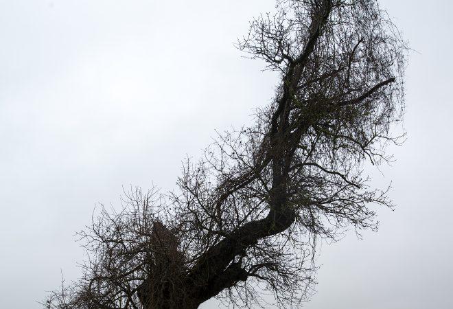l'arbre foudroyé