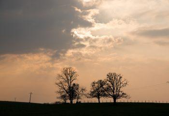 Petits arbres sans prétention