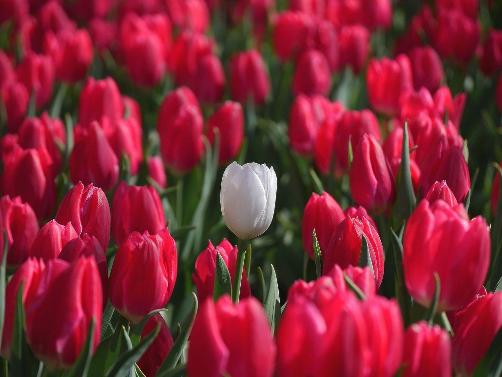 bloom your way