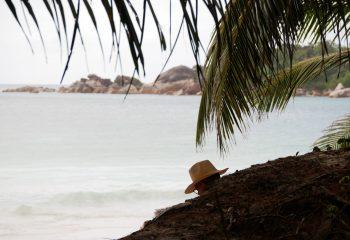 A l'ombre des cocotiers