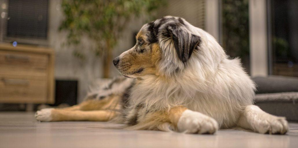 Mon chien : Mac