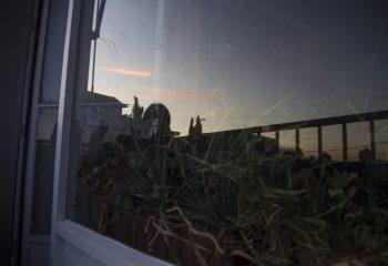 Fumy on balcony