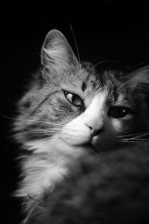 Portrait d'un chat
