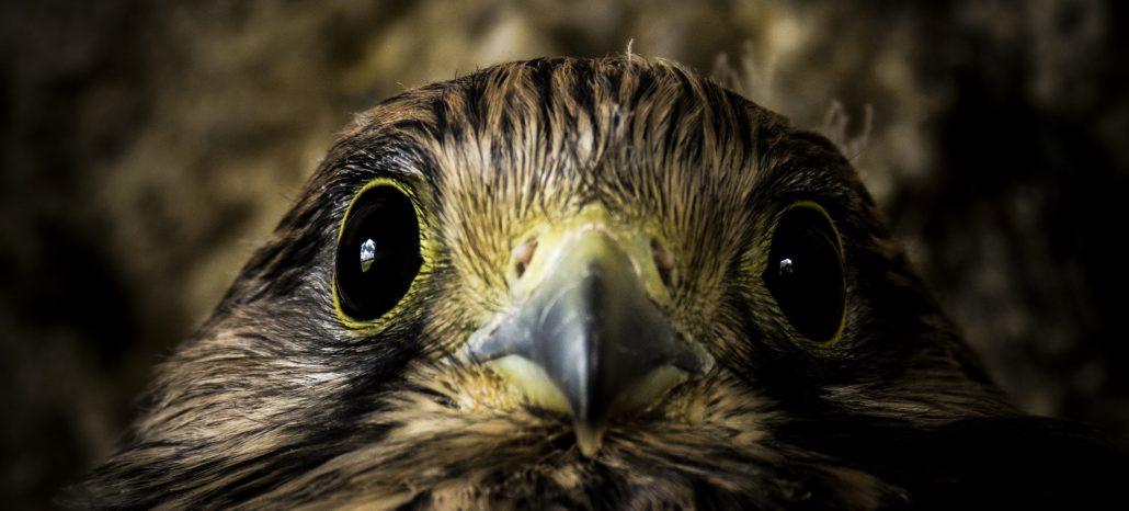 Les yeux dans les yeux