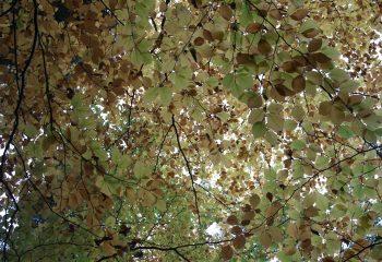 Plafond de feuilles