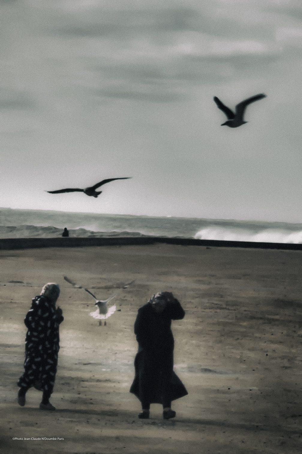 Les Ailes d'Essaouira 2