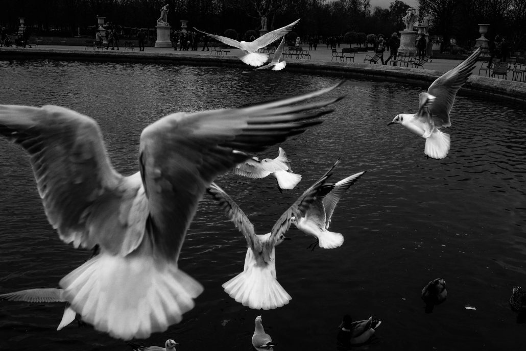 Mouettes dans Paris