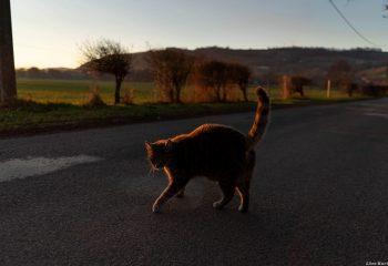 Le chat de Boudieu