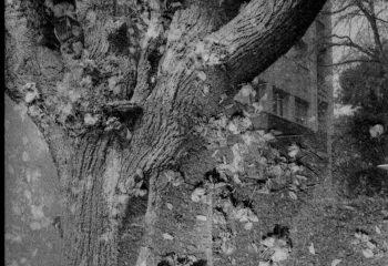 l'arbre mortvivant / résilient par nature