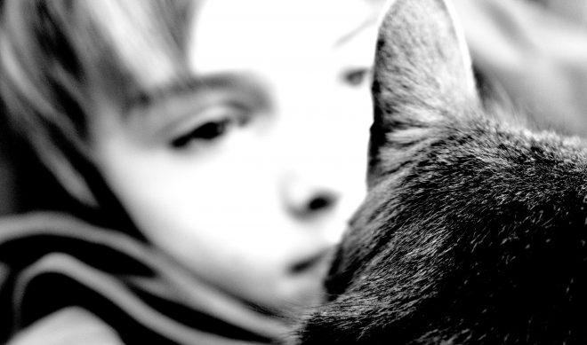 câlin chat